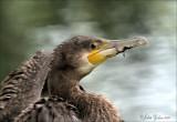 vogels_birds