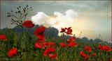 landschap_scenery