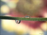 druppels_droplets