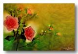 bloemen_nabewerkt_flowers_postworked