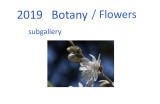 botany  flowers and other