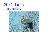 2021 birds