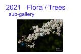 flora  trees