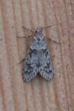 Chimabachidae  - Kortvleugelmotten