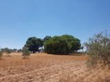 Monroy - Càceres - Spanje