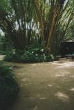 Bosque Rodrigues Alves