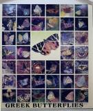 Greek butterflies