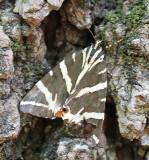 Greek butterfly