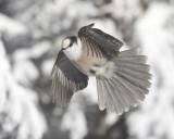 en_vol__in_flight