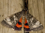 mites_-_moths