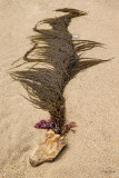 Plages - Normandie le 09 juin 2014-7942
