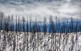 Valles Caldera, Burned Out Ridge