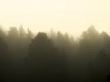 Through the Rising Fog