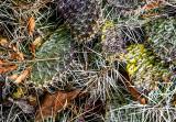 New Mexico Briar Patch