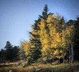 October's Aspen