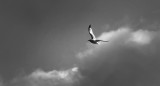 That You Jonathan Livingston Seagull?