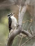 Wildlife of Bosque Del Apache & the Rio Grande River Valley