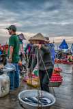 The Morning Catch Goes to Market
