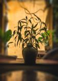 Quiet Cafe Corner
