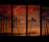 Hawaiian Daydream