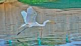 Egret 6270