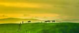 Tuscan Countryside pano