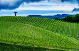 St Francis of Assisi Watches over the Il Molino di Grace Vineyards