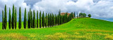 Cypress Trees Line a Road to a Villa