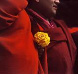 Monk's Flower