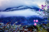 Cosmos in the Mountain Mist