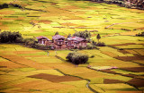 Farm Land Patterns of the Paro Valley