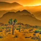 DesertGold