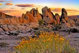 High Desert Late Spring