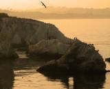 Pelicans at Shell Beach