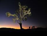 Joshua Tree Night / Light-Painted