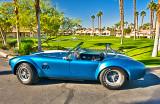 Cobra in Palm Springs
