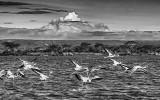 Flamingo Lift-Off