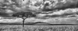 Kenyan Plains