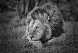 The King in Repose