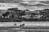 First Kenyan Morning