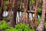 Coconut Palms, Hala Trees and Water Lettuce