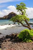 Alau Island Seabird Sanctuary