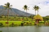 Maui Tropical Plant'nation