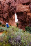 Pine Tree Arch