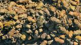 a frenzy of froglets