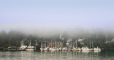 Fog in Eagle harbor_Pat Egaas.jpg