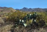 Distant Tortuga Mountain
