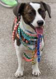 Parade Pup
