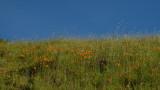 Hiking Sunol Regional Wilderness - 04/14/19
