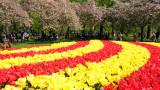 Netherland/Greece - Keukenhof Garden, 4/24/19